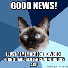 Hahahahaha ›› #Brain_fog ›› #Autoimmune_Disease ›› Chronic Illness Cat