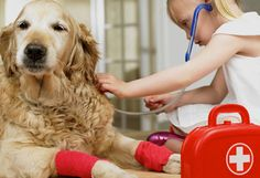 Escoger al veterinario, ¿cómo, por qué? - Animal Care