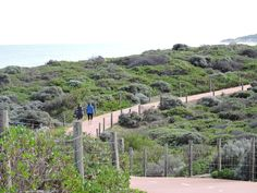 An up and down trail at Burns Beach, WA Photographer Constance Paul