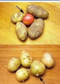 An apple stops potatoes sprouting!