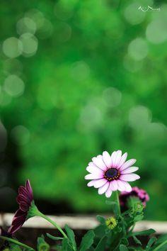 light purple flower - beautiful