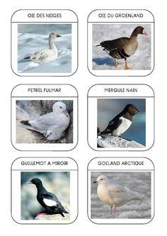 Imagier des animaux polaires page 11