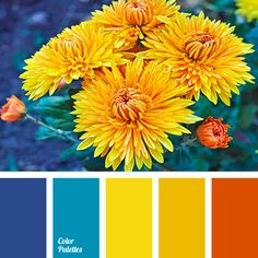 New bath room colors palette orange Ideas Orange Color Palettes, Color Schemes Colour Palettes, Red Colour Palette, Color Red, Yellow Color Schemes, Blue Palette, Pantone, Design Seeds, Wedding Reception Ideas