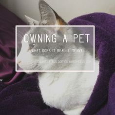 Owning a pet Take Care Of Me, Take That, People Dont Understand, Interesting Reads, Self Development, Pet Care, Feelings, Pets, Reading