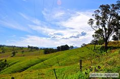 Rolling Hills of Sailibury Rd - Barrington Tops Australia---australia is my number 1 place to go!