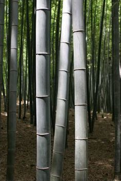 Mindful Monday: The Fern and the Bamboo