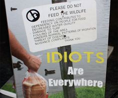 Idiots Are Everywhere Book - https://tiwib.co/idiots-everywhere-book/ #Books+Reading #gifts #giftideas #2017giftideas #xmas