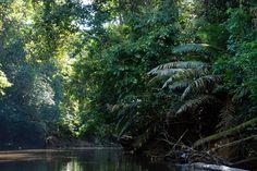 The Amazon Rainforest Beautiful | Amazon Rainforest Archives • Acaté