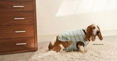 Os cães também têm problemas. A campanha impressa para a National Geographic, Dog Whisperer with Cesar Millan.   Diretores de Criação: Phil ...