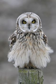 Owl.--'how 'bout this dress?'