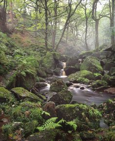 stunning ancient woodland of Padley Gorge (Peak District) and one of the photographer's very first images made on film, Velvia Peak District, Take Better Photos, Walk In The Woods, English Countryside, Beautiful Landscapes, Beautiful Places, Scenery, Places To Visit, Photography Tips