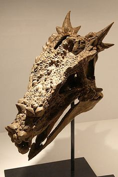Dracorex: A Dragon the Scientists will admit to. Remember, there was no word for dinosaur in ancient times. Political correctness is a powerful tool to create division between truth and reality (per etymological definitions). Fossil Hunting, Dragon King, Dinosaur Fossils, Extinct Animals, Prehistoric Creatures, Animal Skulls, Ancient Aliens, Archaeology, Dinosaurs