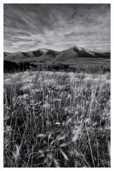 'Tundra summer' von Priska  Wettstein