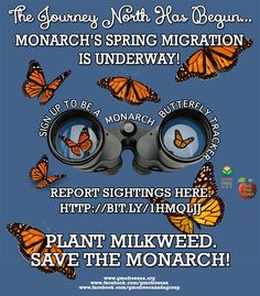 MONARCH BUTTERFLY WATCH! The Journey North has just begun! It lasts from March until June. Sign up, report your sightings. Wonderful project to do with your children. Save one of nature's most precious gifts from habitat destruction by Roundup & GMO crops.  Sign up and report here: www.learner.org/jnorth/tm/monarch/SpringWatch.html Order free milkweed seeds here: www.livemonarch.com/free-milkweed-seeds.htm (make a small donation if you are able)