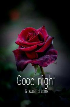 Good Morning Rose Images, Good Night Images Hd, Beautiful Good Night Images, Good Morning Roses, Good Night Quotes, Good Morning Good Night, Good Night Greetings, Good Night Messages, Good Night Wishes