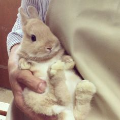 Fox And Rabbit, Dwarf Rabbit, Bunny Rabbit, Baby Bunnies, Funny Bunnies, Cute Bunny, Netherland Dwarf Bunny, Baby Harp Seal, Lionhead Rabbit