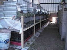 Rabbits, Quail and Worms - the rabbits produce meat and their manure falls down into the pen below, which contains coturnix quail and worms. The worms feed on the rabbit and quail manure, and, in turn, the quail eat maggots and worms and produce meat and eggs. What a cool system!