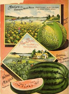Maule's seed catalogue for 1891,  back page