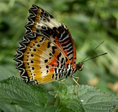 Google Image Result for http://thefabweb.com/wp-content/uploads/2012/04/butterfly13.jpg