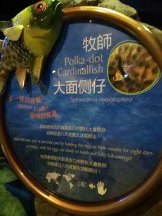 Ocean Park, Aquarium, Polka Dots, Day, Fish Stand, Fish Tank, Aquarius, Polka Dot, Polka Dot Fabric