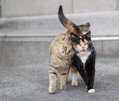 Resultado de imagem para cats in love