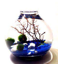 Marimo Moss Ball Terrarium Blue Sands of Time by LivingZenArt