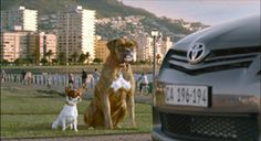 New Dog Joins Buddy In Toyota Auris X TVC