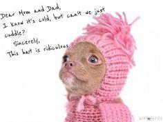 #puppy #adoption