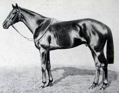 Boswell(1933)Bosworth- Flying Gal By Sir Gallahad III. 4x5 To Bay Ronald & Flying Fox. 23 Starts 3 Wins. Won St Leger S(Eng), Eclipse S(Eng). Died In 1949.