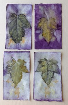 Eco prints on paper by Marilyn Stephens artist.
