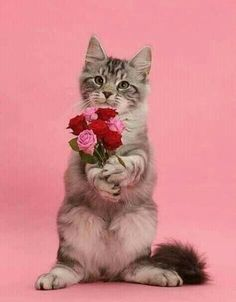 Photograph of Silver tabby kitten, Blaze, 3 months old, with a bunch of flowers on pink background. Rights managed image. Bunch Of Flowers, Pink Flowers, Silver Tabby Kitten, Beautiful Kittens, Good Night Wishes, Cat Birthday, Birthday Treats, Cat Posters, Your Best Friend