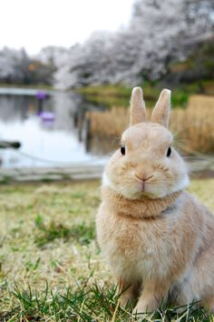 "llbwwb: "" For the bunny lovers:) Rabbit by Yuki Matsukura """
