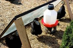 Five Easy Ways to Keep your Chickens' Water from Freezing this Winter: 3. Make a 'Sunroom' - Rig up a 'sunroom' like this one from Abundant Permaculture and let the sun keep the water from freezing. Your chickens will also love lounging in the warm sunny area out of the wind.