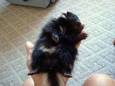 {sleepy smiling baby skunk} cuteness!