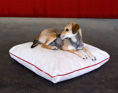 The highly durable dog pillow DIVAN Marie is filled with latex. The healthy dog pillow is washable and convinced by their durability, quality and comfort.