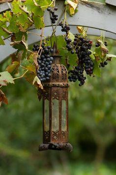 My inner landscape Lantern Candle Holders, Candle Lanterns, Jardin Decor, Garden Whimsy, Garden Cottage, Garden Art, Garden Lanterns, Vitis Vinifera, Wine Country