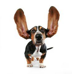 Are you a good listener? http://www.biguseof.com