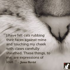 11 Quotes for the Love of Dog or Cat - http://www.homesalive.ca/blog/for-the-love-of-dog-or-cat/