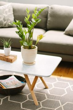 ZZ Plants are the Pinnacle of Low-Maintenance Houseplants | Apartment Therapy