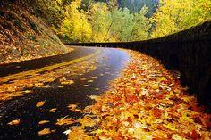 Autumn road, Oregon