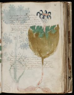This bizarre medieval manuscript has never been deciphered Voynich Manuscript, Medieval Manuscript, Illuminated Manuscript, Masonic Symbols, A Discovery Of Witches, Library Images, Book Of Life, Botanical Art, Art Projects