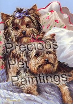 Yorkshire Terrier Bed Bugs-GF – Precious Pet Paintings