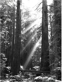 Take a hike through the Majestic forest of Muir Woods.