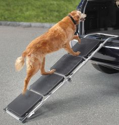 Option for a dog wash non slip ramp open front tub tray and spray portable pet staircase solutioingenieria Image collections