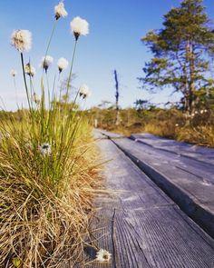 Valkmusan kansallispuisto