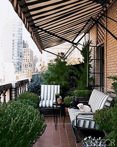 Not screened in, but mosquitoes don't like the city much. Buff brick, topiaries, boxwoods, limestone balustrade, black and white striped awning - city terrace perfection.
