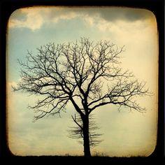 love tree sillouettes