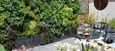 Hoe maak je een verticale tuin?