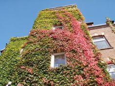 Herbstanfang im Garten Apartment Marienstraße