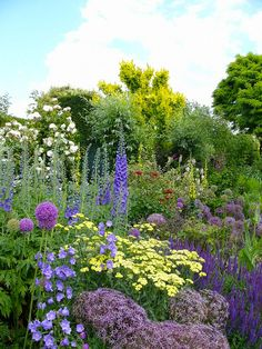 Perennial Garden- I spy alliums, achillea-Coronation Gold, Purple salvia